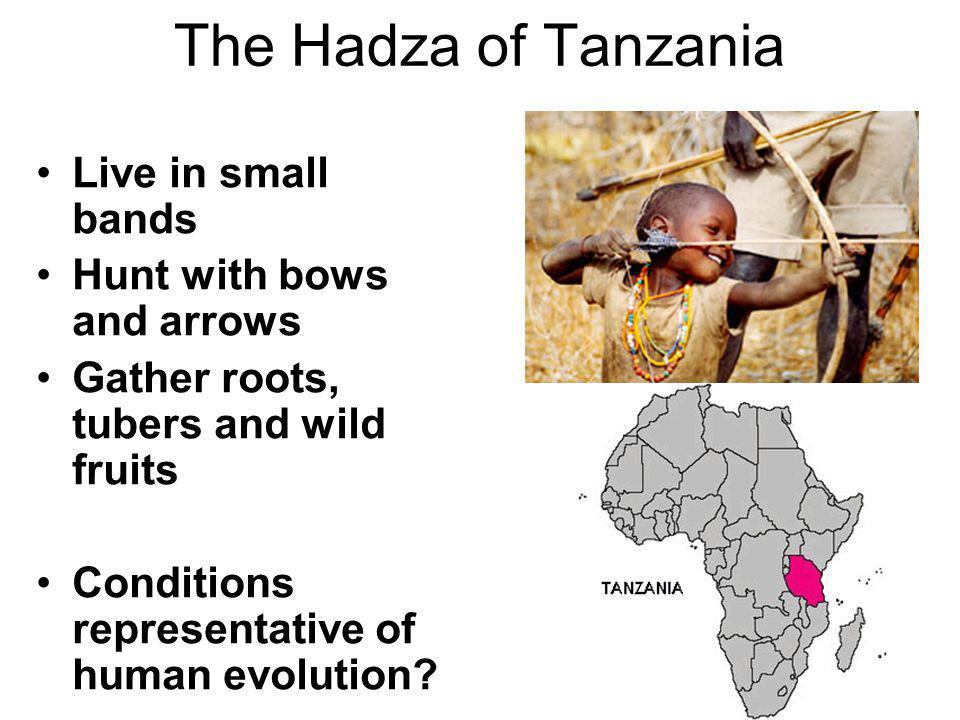 The Hadza of Tanzania Live in small bands Hunt with bows and arrows Gather roots, tubers and wild fruits Conditions representative of human evolution?