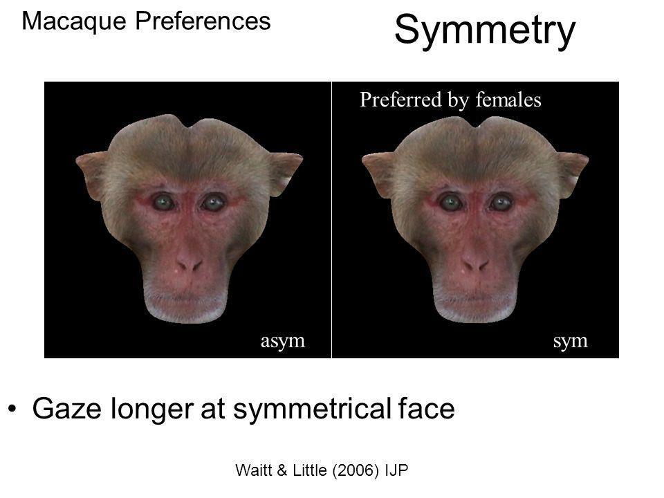 Macaque Preferences Preferred by females Gaze longer at symmetrical face Symmetry asymsym Waitt & Little (2006) IJP