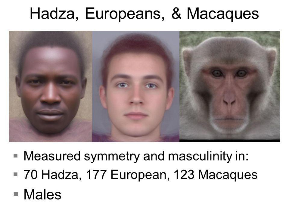 Hadza, Europeans, & Macaques §Measured symmetry and masculinity in: §70 Hadza, 177 European, 123 Macaques §Males