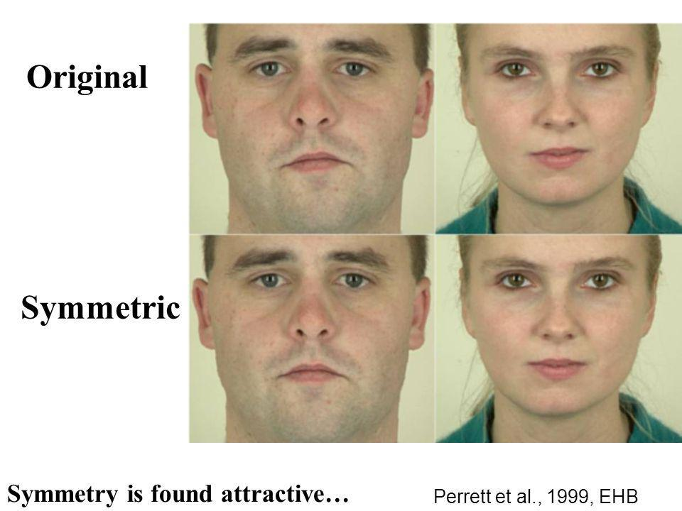 Symmetry is found attractive… Original Symmetric Perrett et al., 1999, EHB
