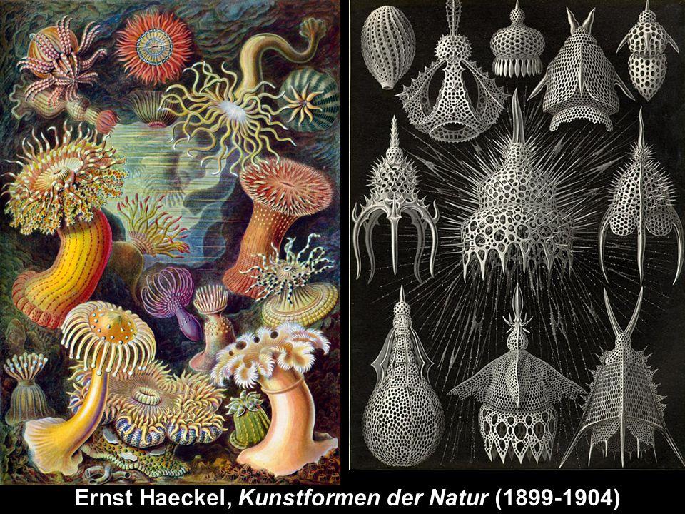 2. science & art Ernst Haeckel, Kunstformen der Natur (1899-1904)