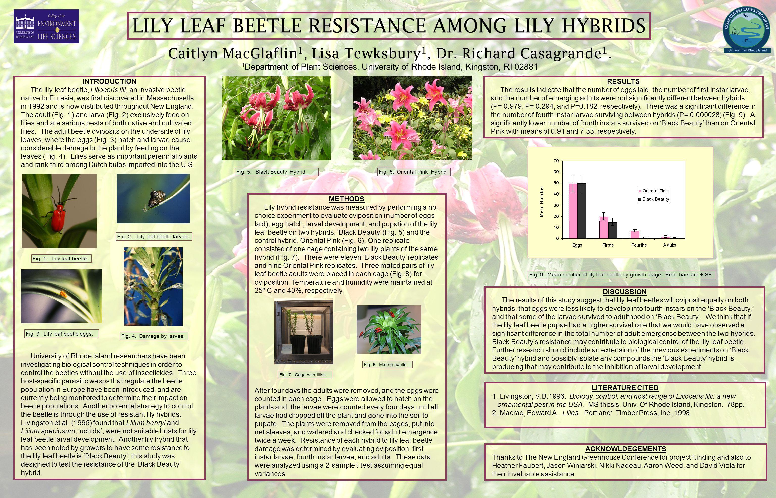 LILY LEAF BEETLE RESISTANCE AMONG LILY HYBRIDS Caitlyn MacGlaflin 1, Lisa Tewksbury 1, Dr. Richard Casagrande 1. 1 Department of Plant Sciences, Unive