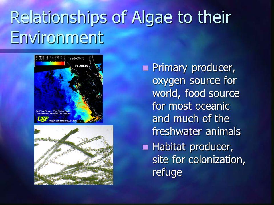 Where do you find Algae.