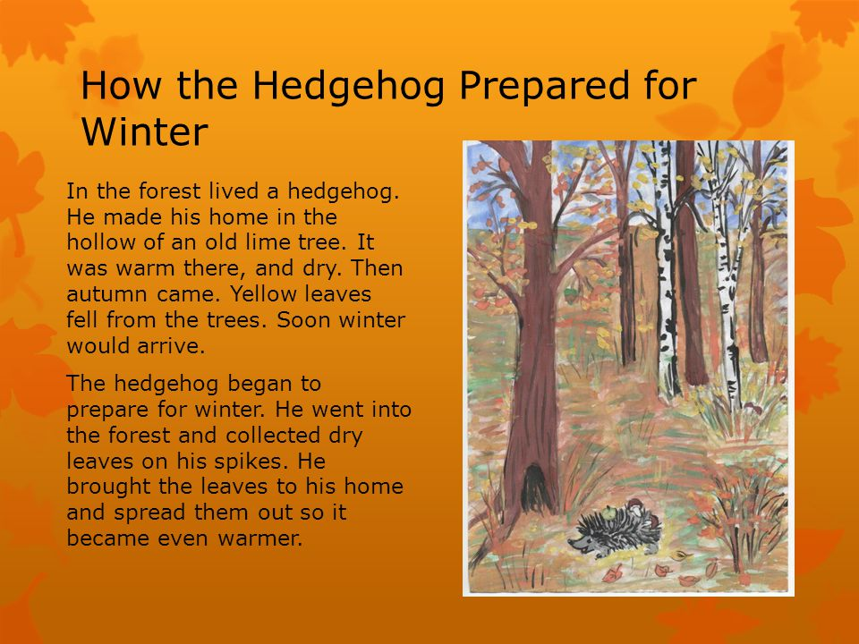 How the Hedgehog Prepared for Winter In the forest lived a hedgehog.