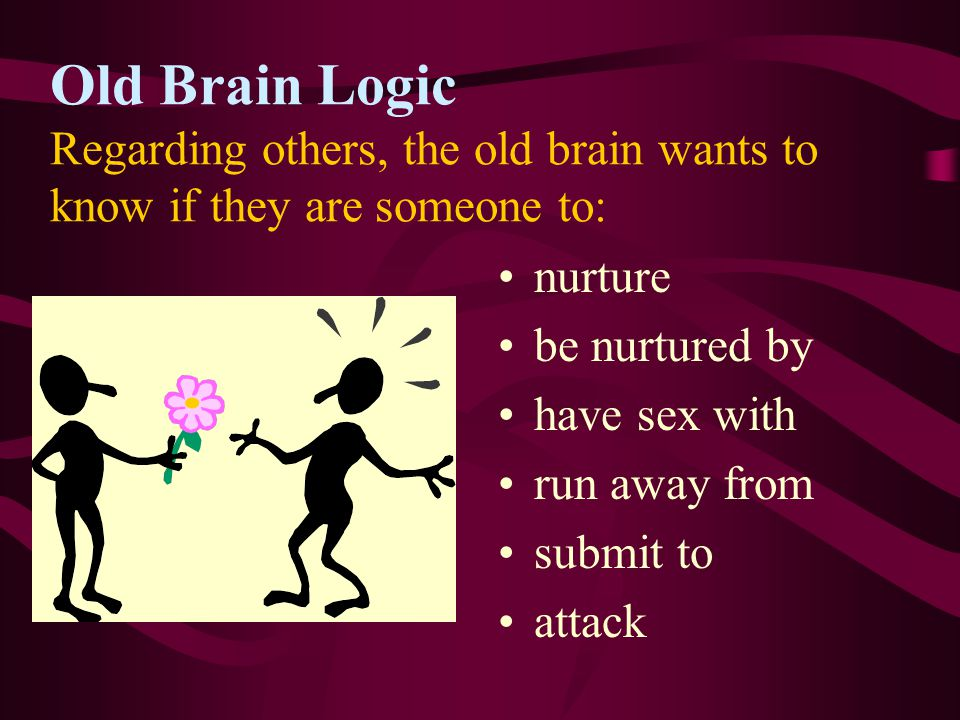 3. Brain Stem - Old Reptilian Brain Most primitive layer, oversees: reproduction self-preservation vital functions - circulation of blood, breathing,