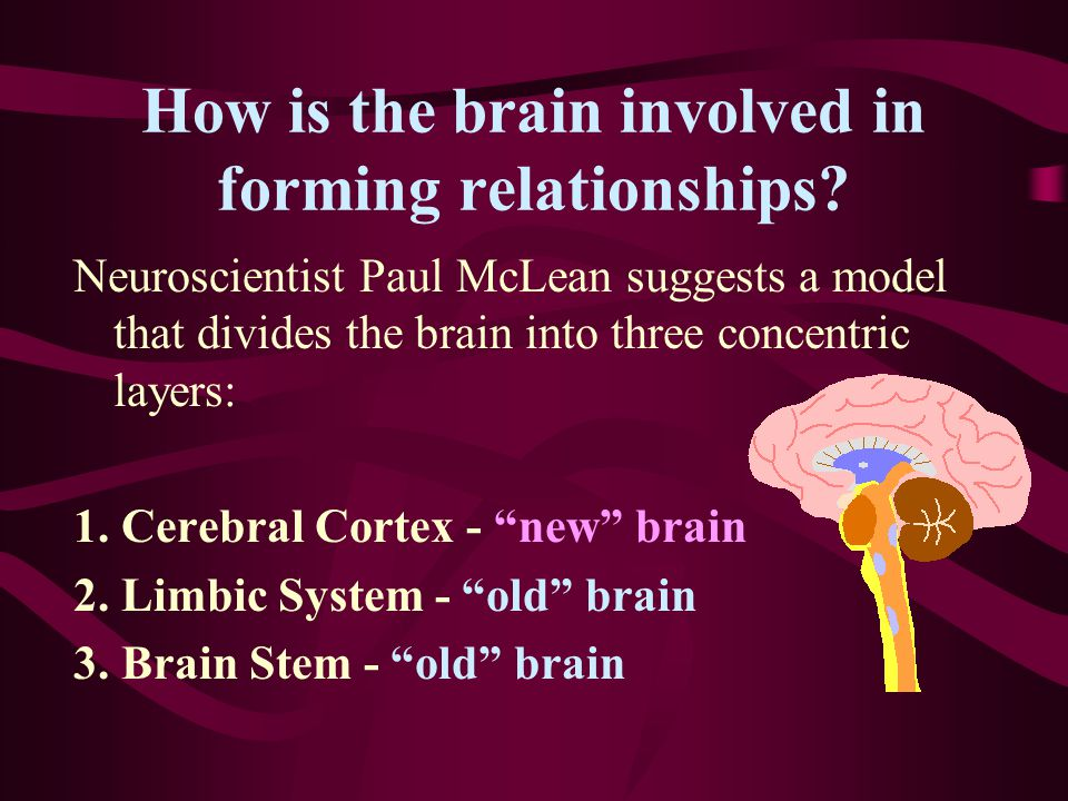 How is the brain involved in forming relationships.