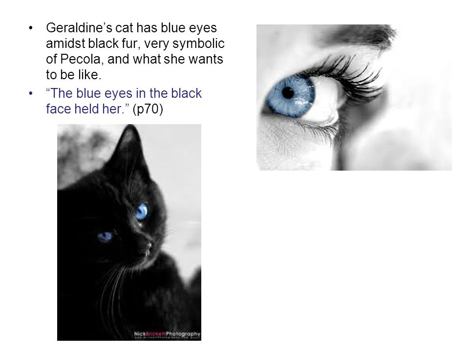 Geraldines cat has blue eyes amidst black fur, very symbolic of Pecola, and what she wants to be like. The blue eyes in the black face held her. (p70)