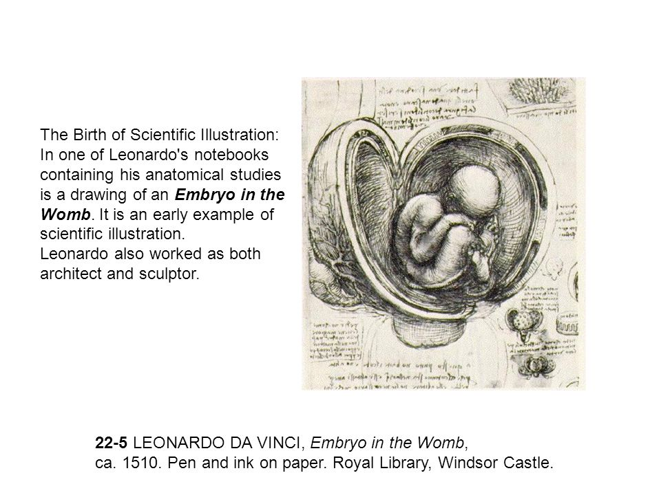 The Birth of Scientific Illustration: In one of Leonardo's notebooks containing his anatomical studies is a drawing of an Embryo in the Womb. It is an