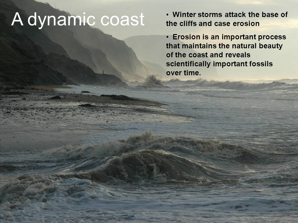 A dynamic coast Winter storms attack the base of the cliffs and case erosion Erosion is an important process that maintains the natural beauty of the coast and reveals scientifically important fossils over time.