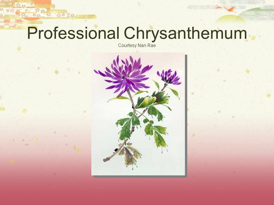 Professional Chrysanthemum Courtesy Nan Rae