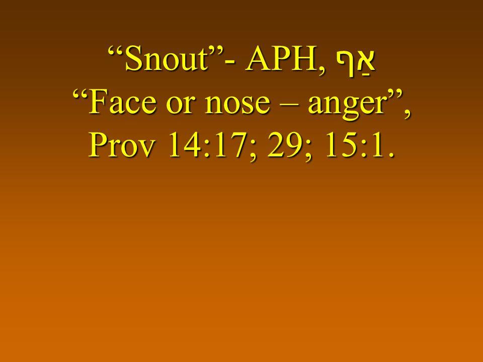 Snout- APH, אַף Face or nose – anger, Prov 14:17; 29; 15:1.
