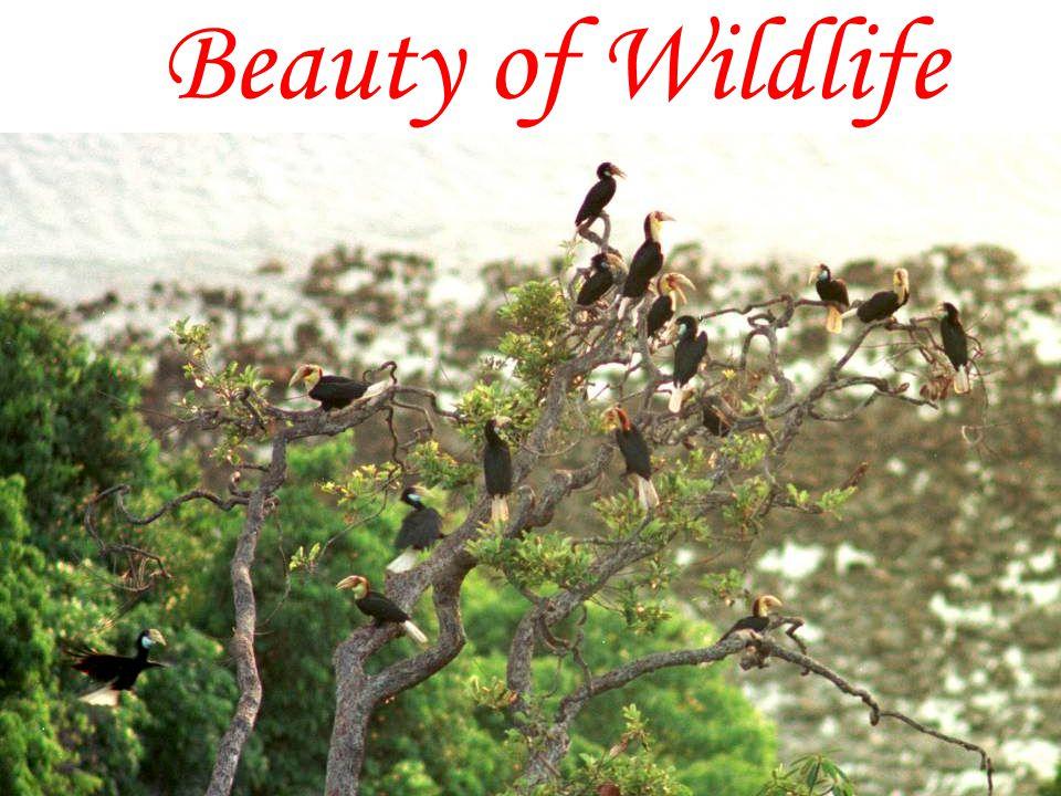 Beauty of Wildlife