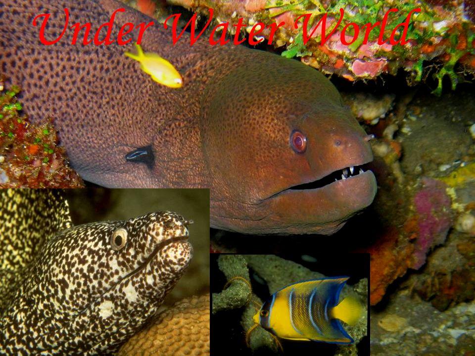 Under Water World