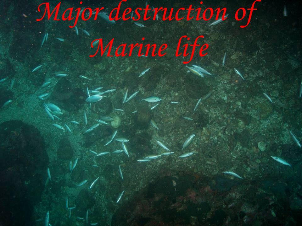 Major destruction of Marine life