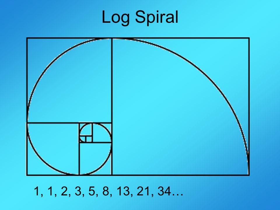 Log Spiral 1, 1, 2, 3, 5, 8, 13, 21, 34…