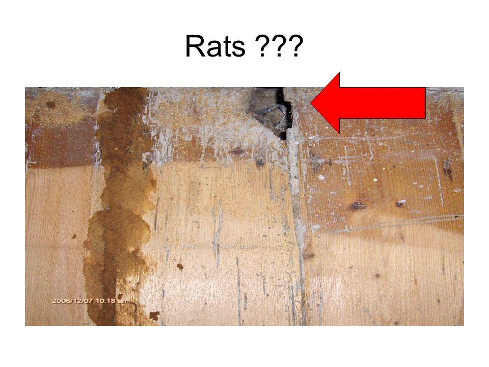 Rats ???