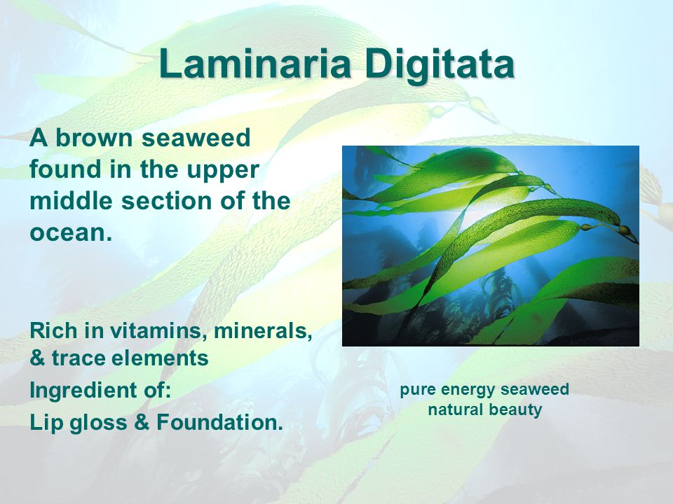Laminaria Digitata A brown seaweed found in the upper middle section of the ocean. Rich in vitamins, minerals, & trace elements Ingredient of: Lip glo