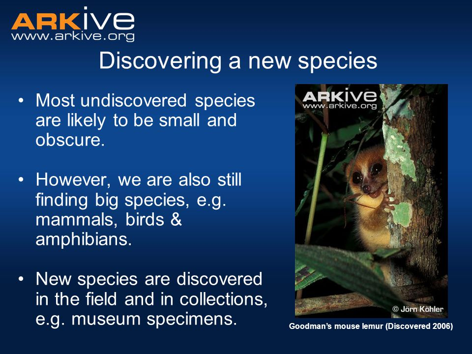 Discovering a new species Most undiscovered species are likely to be small and obscure. However, we are also still finding big species, e.g. mammals,