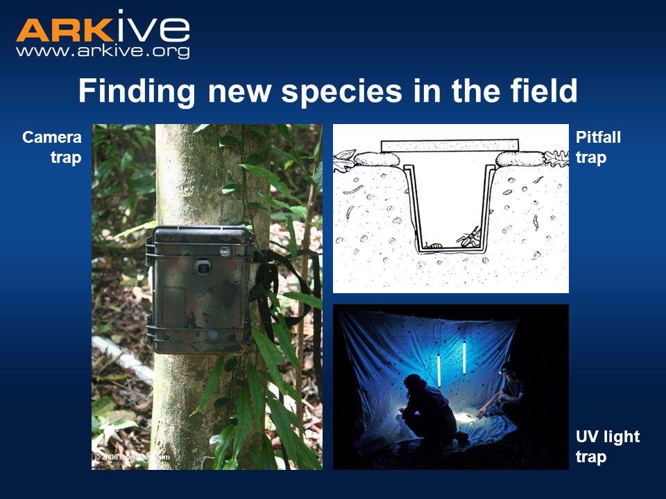 Pitfall trap UV light trap Camera trap Finding new species in the field