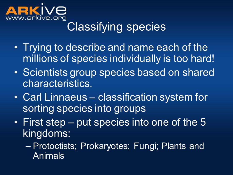 Kingdom Phylum Class Order Family Genus Species Kingdom Phylum Class Phylum Class Order Etc.