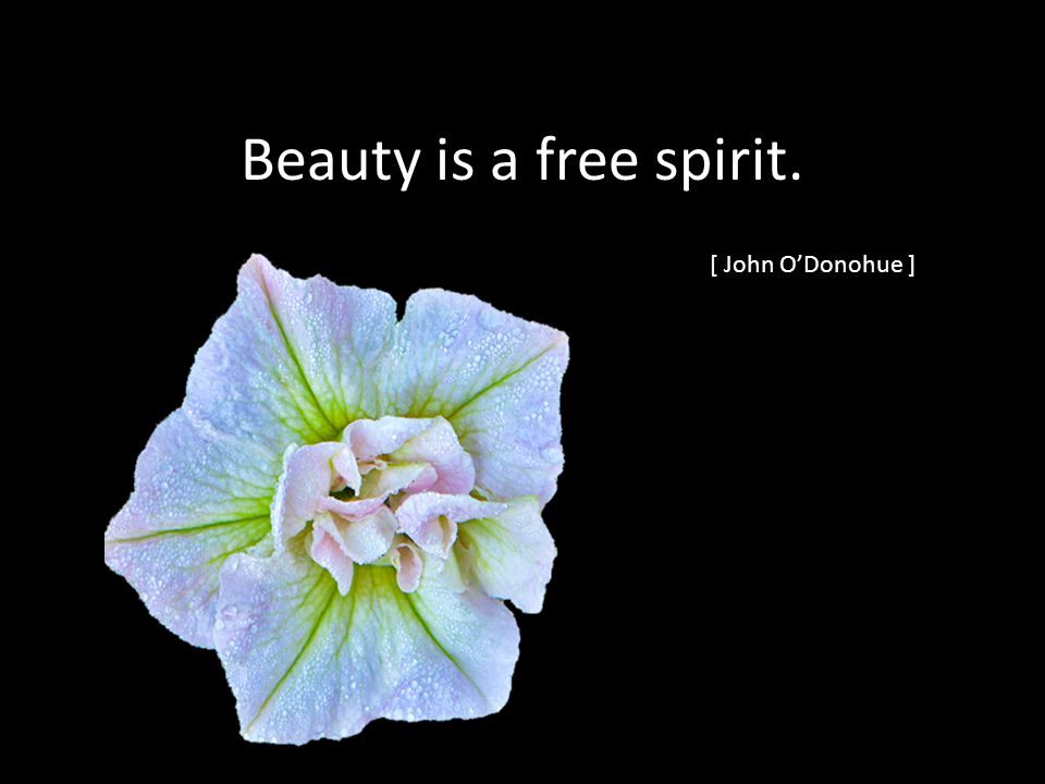 Beauty is a free spirit. [ John ODonohue ]