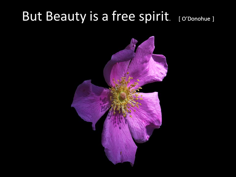 But Beauty is a free spirit. [ ODonohue ]