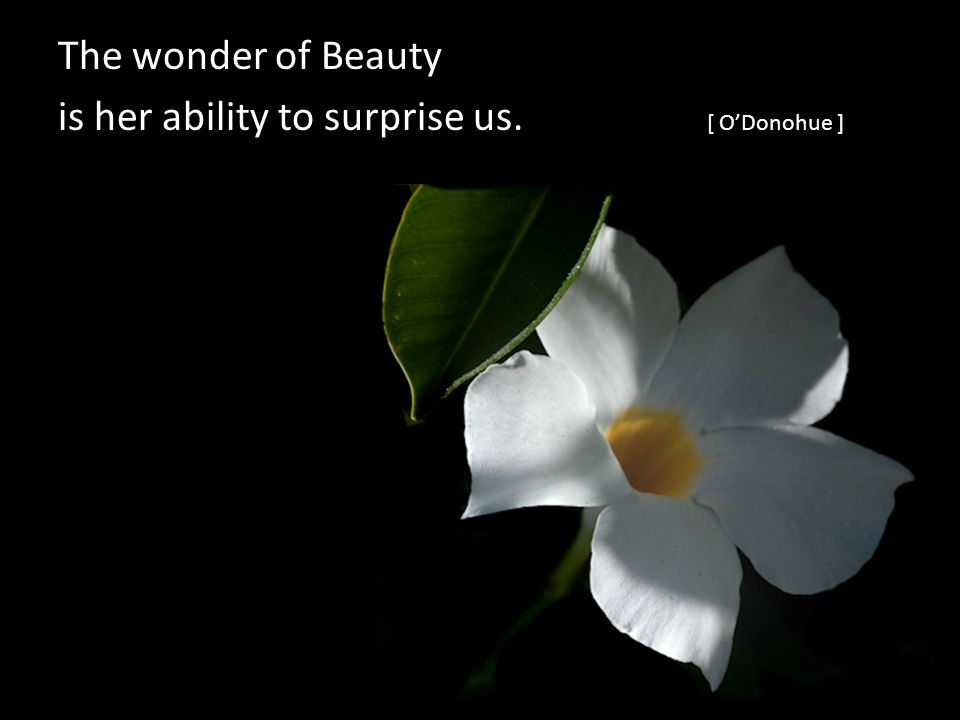 The wonder of Beauty is her ability to surprise us. [ ODonohue ]
