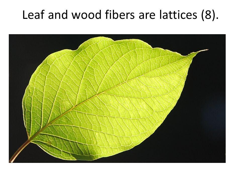 Leaf and wood fibers are lattices (8).