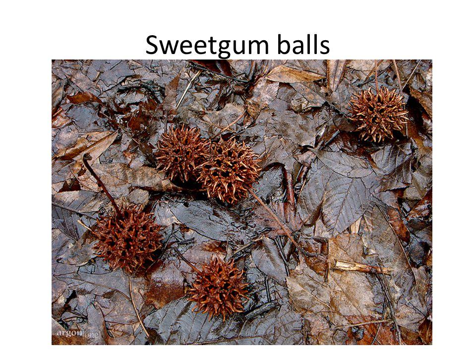 Sweetgum balls