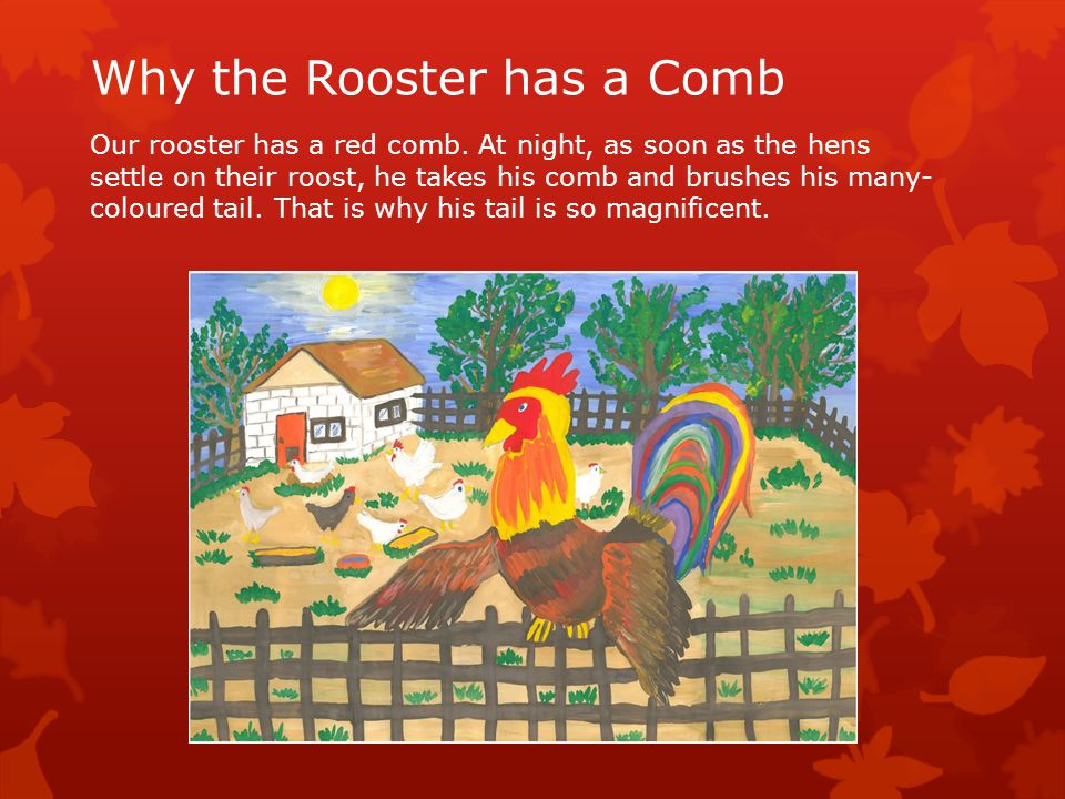 Why the Rooster has a Comb Our rooster has a red comb.