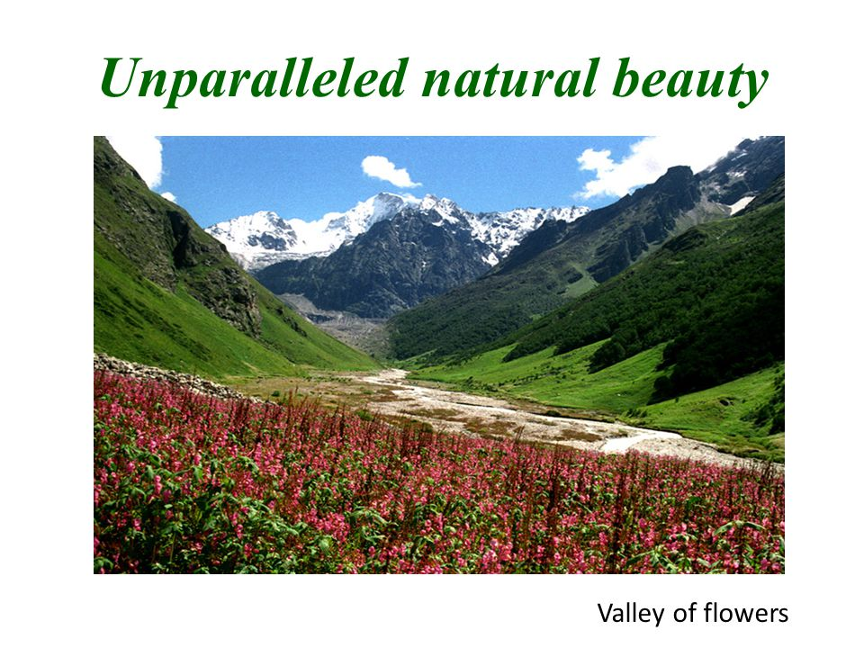 Unparalleled natural beauty Valley of flowers