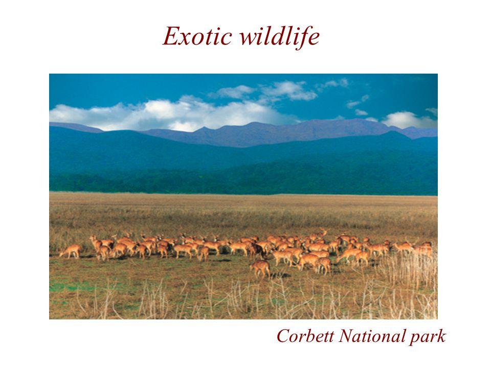 Exotic wildlife Corbett National park