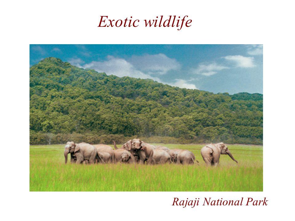 Exotic wildlife Rajaji National Park
