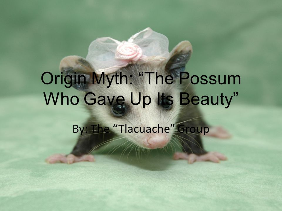 The Story… Once upon a time there was a creature in the vast sky world, his name was Possum The Beautiful.
