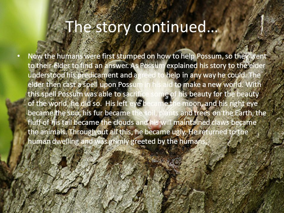 The story continued… Now the humans were first stumped on how to help Possum, so they went to their elder to find an answer.