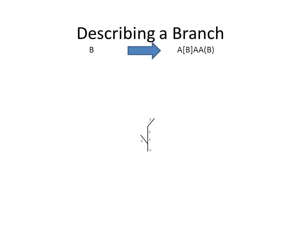 Describing a Branch B A[B]AA(B)