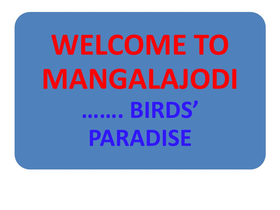 WELCOME TO MANGALAJODI ……. BIRDS PARADISE