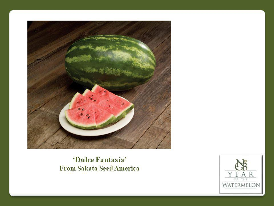 Dulce Fantasia From Sakata Seed America