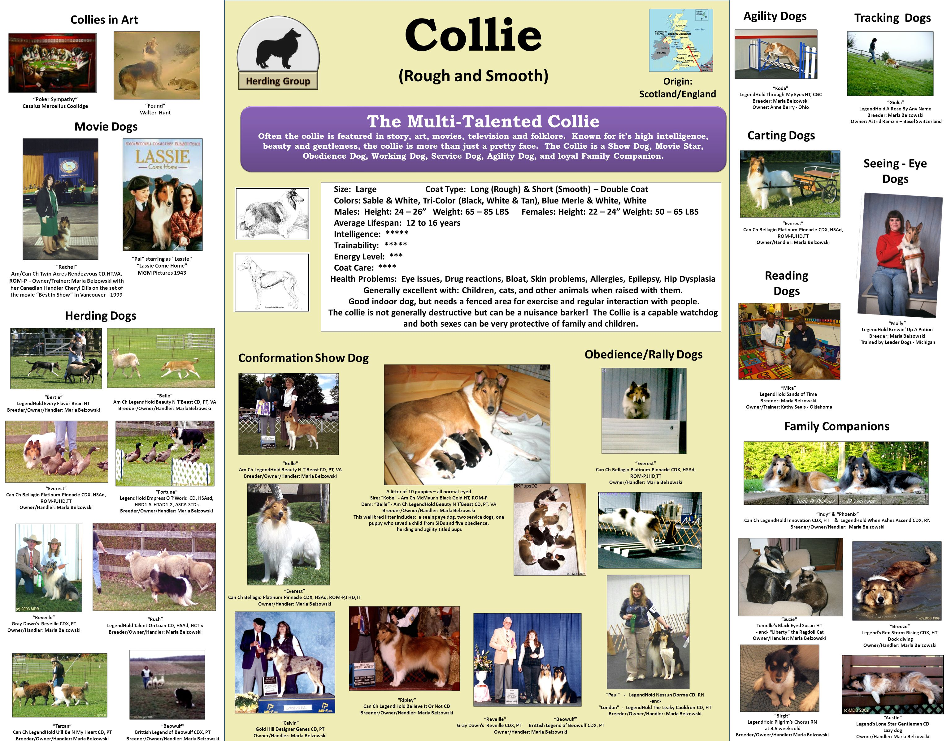 Collie (Rough and Smooth) Origin: Scotland/England Size: Large Coat Type: Long (Rough) & Short (Smooth) – Double Coat Colors: Sable & White, Tri-Color