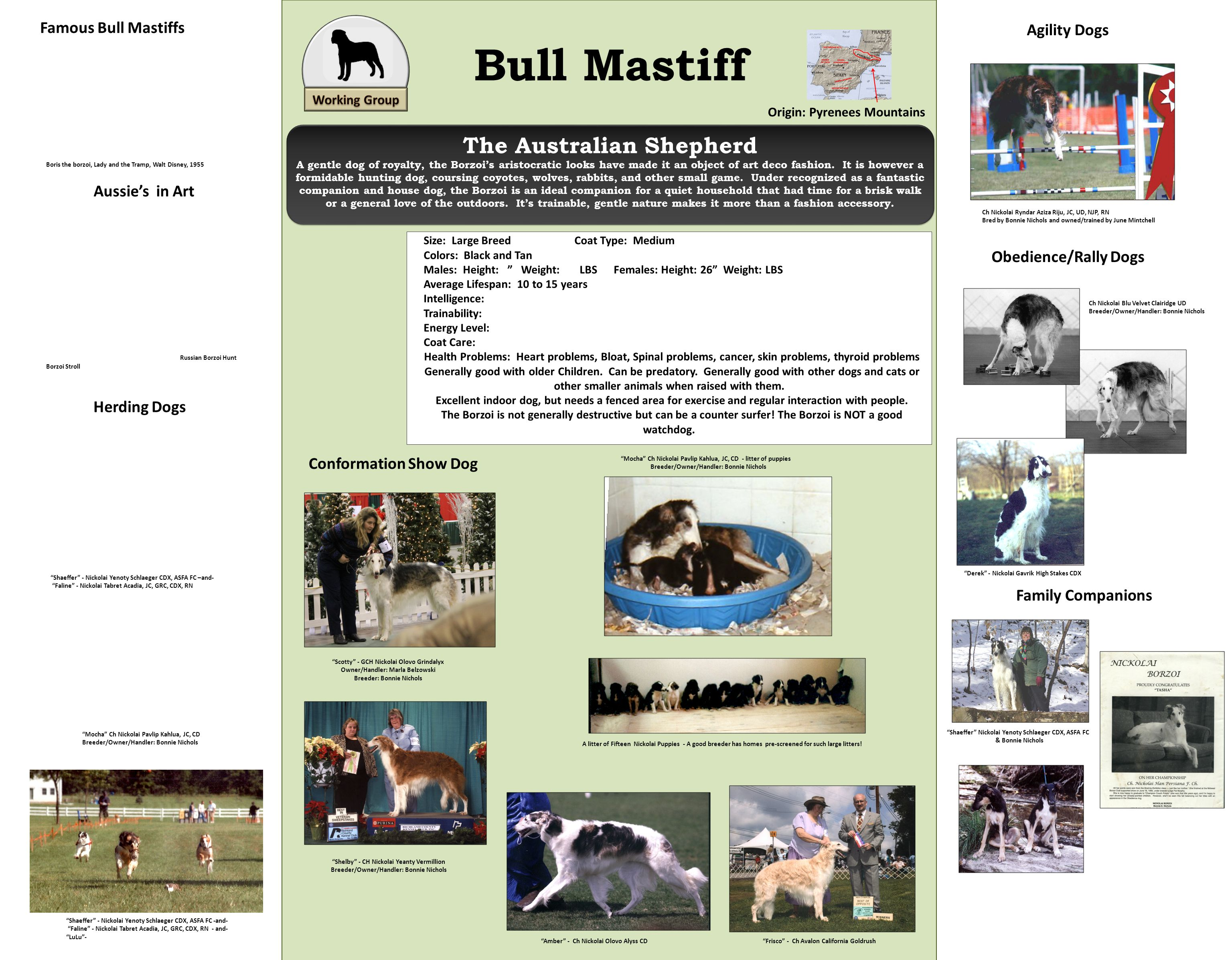 Bull Mastiff Origin: Pyrenees Mountains Size: Large Breed Coat Type: Medium Colors: Black and Tan Males: Height: Weight: LBS Females: Height: 26 Weigh