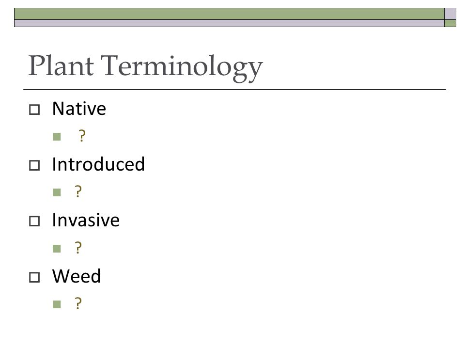 Plant Terminology Native ? Introduced ? Invasive ? Weed ?