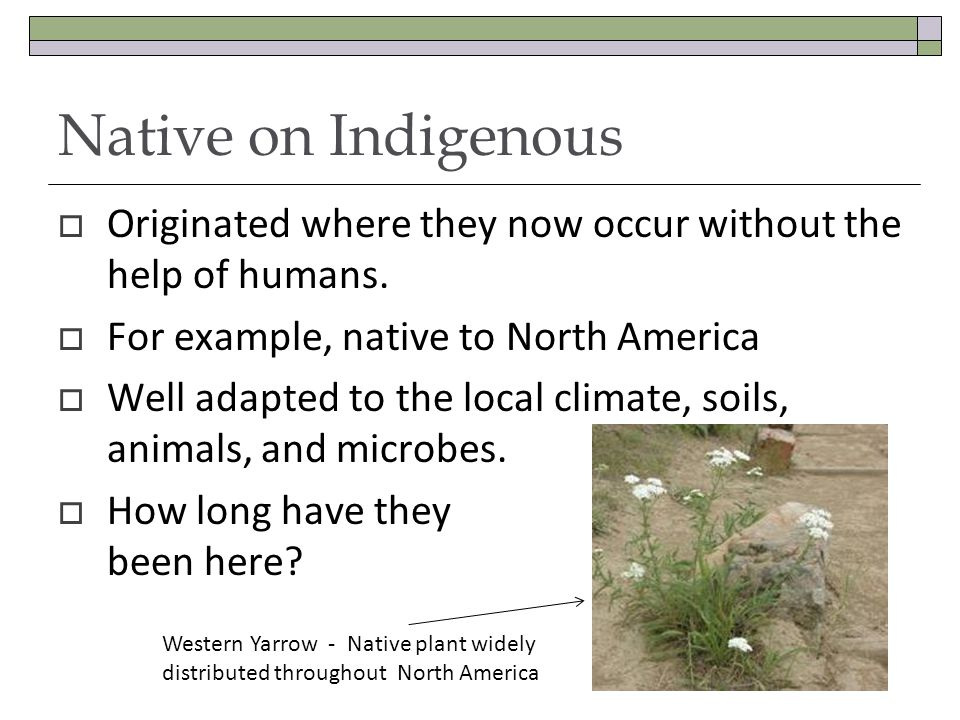 Native on Indigenous Originated where they now occur without the help of humans. For example, native to North America Well adapted to the local climat