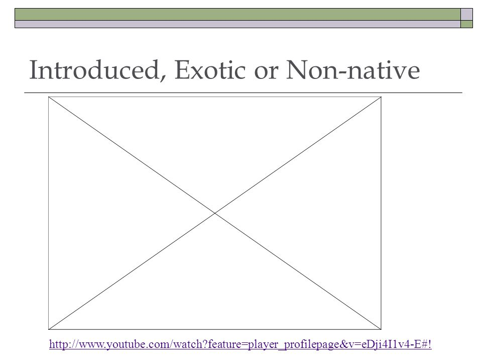 Introduced, Exotic or Non-native http://www.youtube.com/watch?feature=player_profilepage&v=eDji4I1v4-E#!