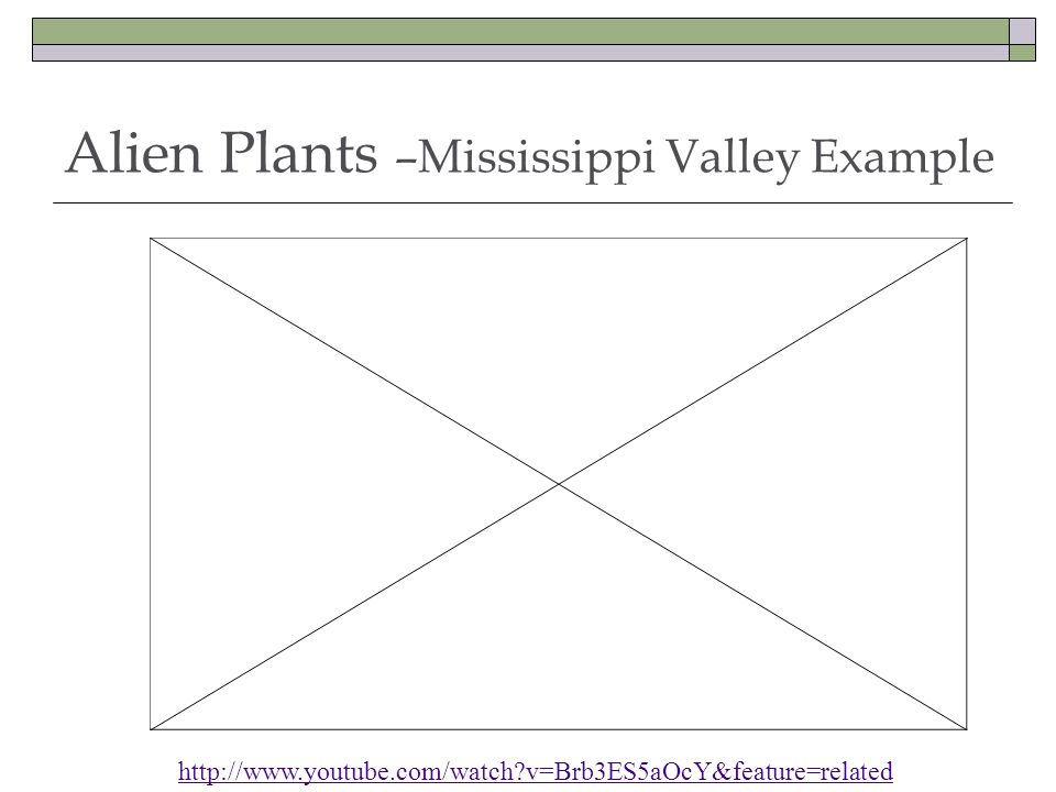 Alien Plants –Mississippi Valley Example http://www.youtube.com/watch?v=Brb3ES5aOcY&feature=related