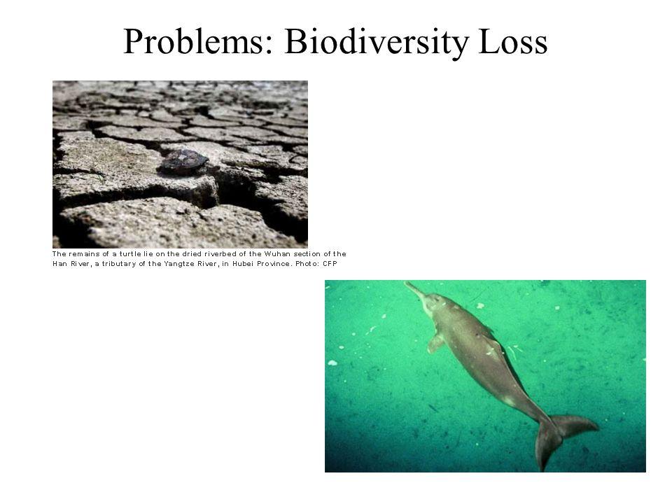Problems: Biodiversity Loss