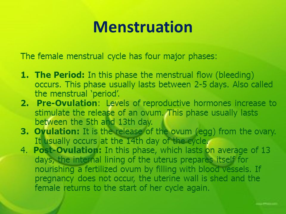 Menstruation The female menstrual cycle has four major phases: 1.The Period: In this phase the menstrual flow (bleeding) occurs.