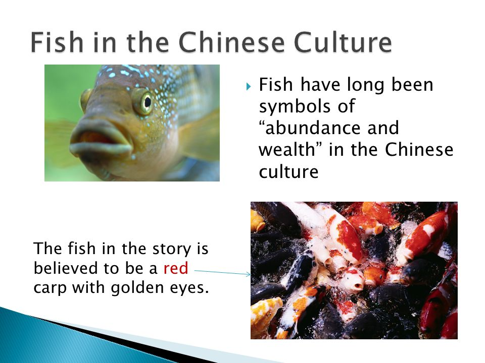Fish have long been symbols of abundance and wealth in the Chinese culture The fish in the story is believed to be a red carp with golden eyes.