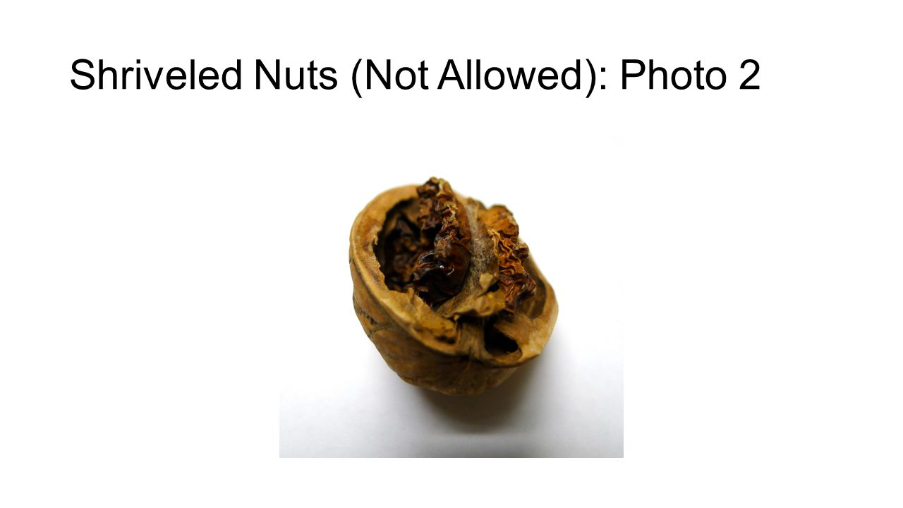 Shriveled Nuts (Not Allowed): Photo 2