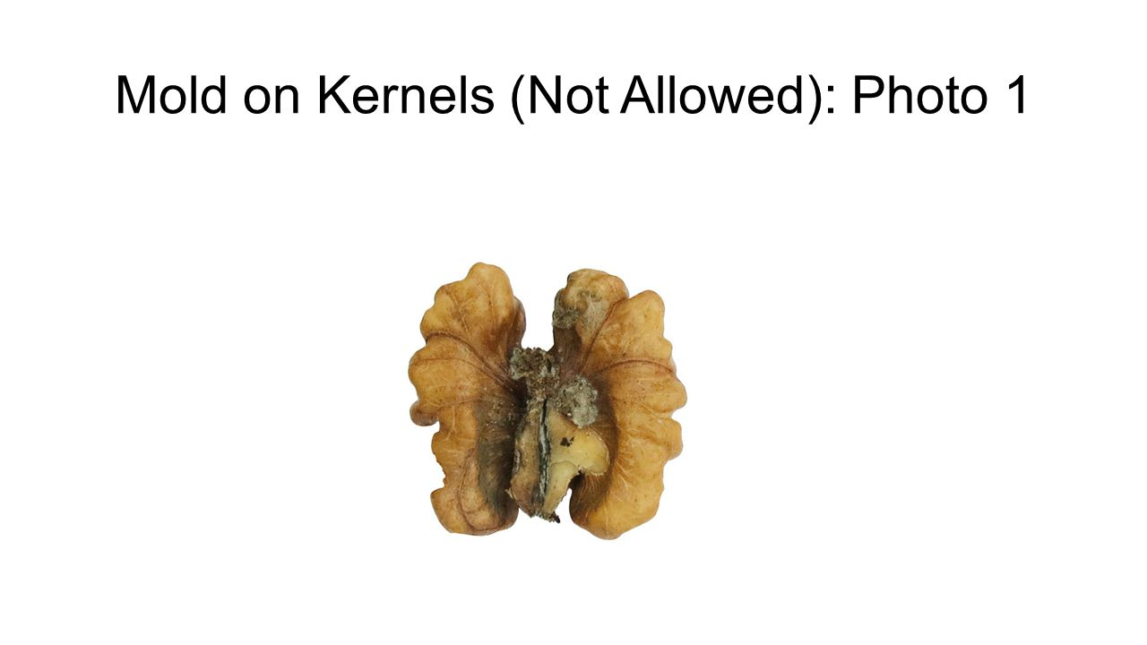 Mold on Kernels (Not Allowed): Photo 1