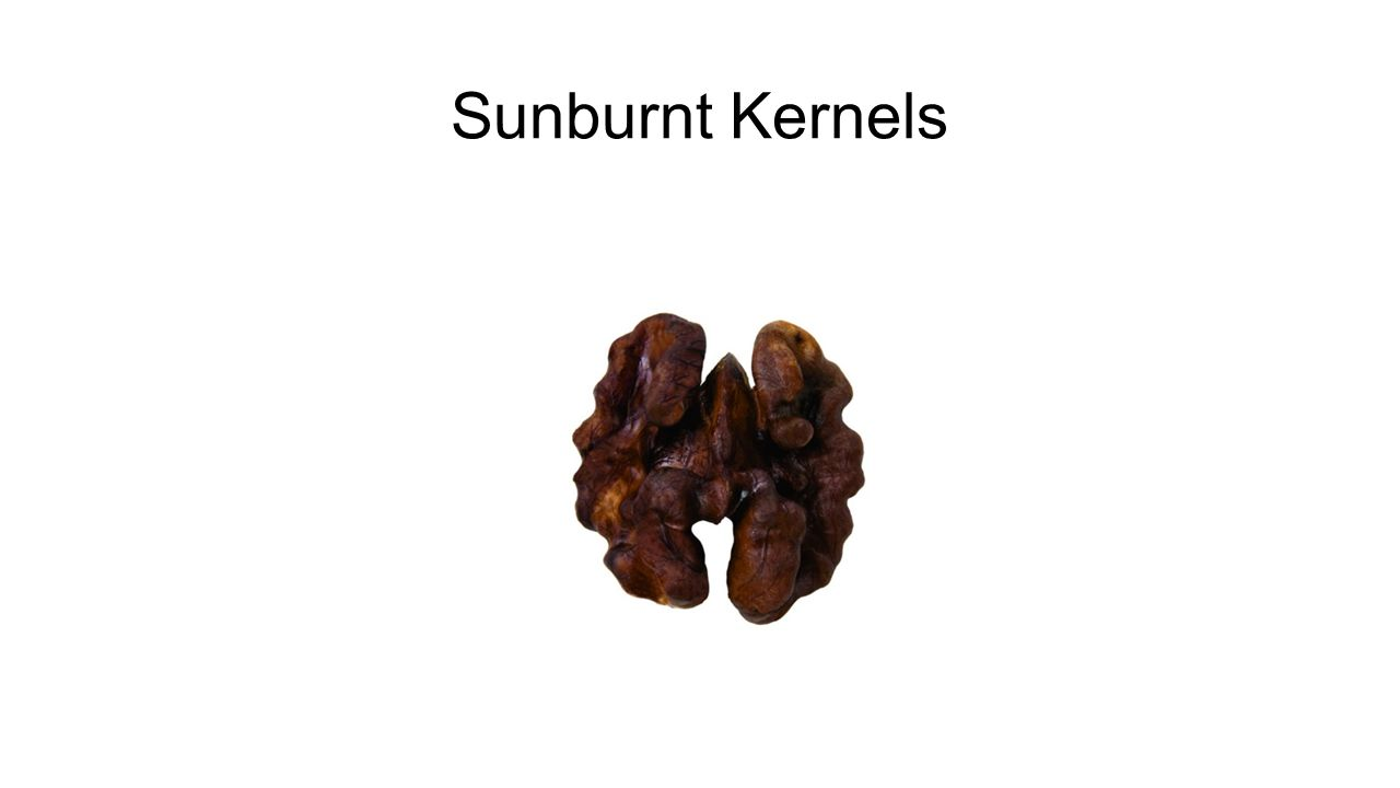Sunburnt Kernels